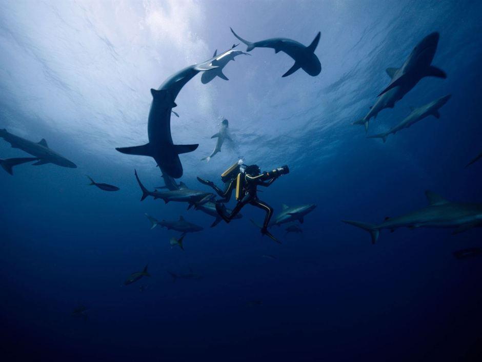 Exploration sous-marine dans L'Odyssée de Jérôme Salle sur le Commandant Cousteau © Wild Bunch Distribution